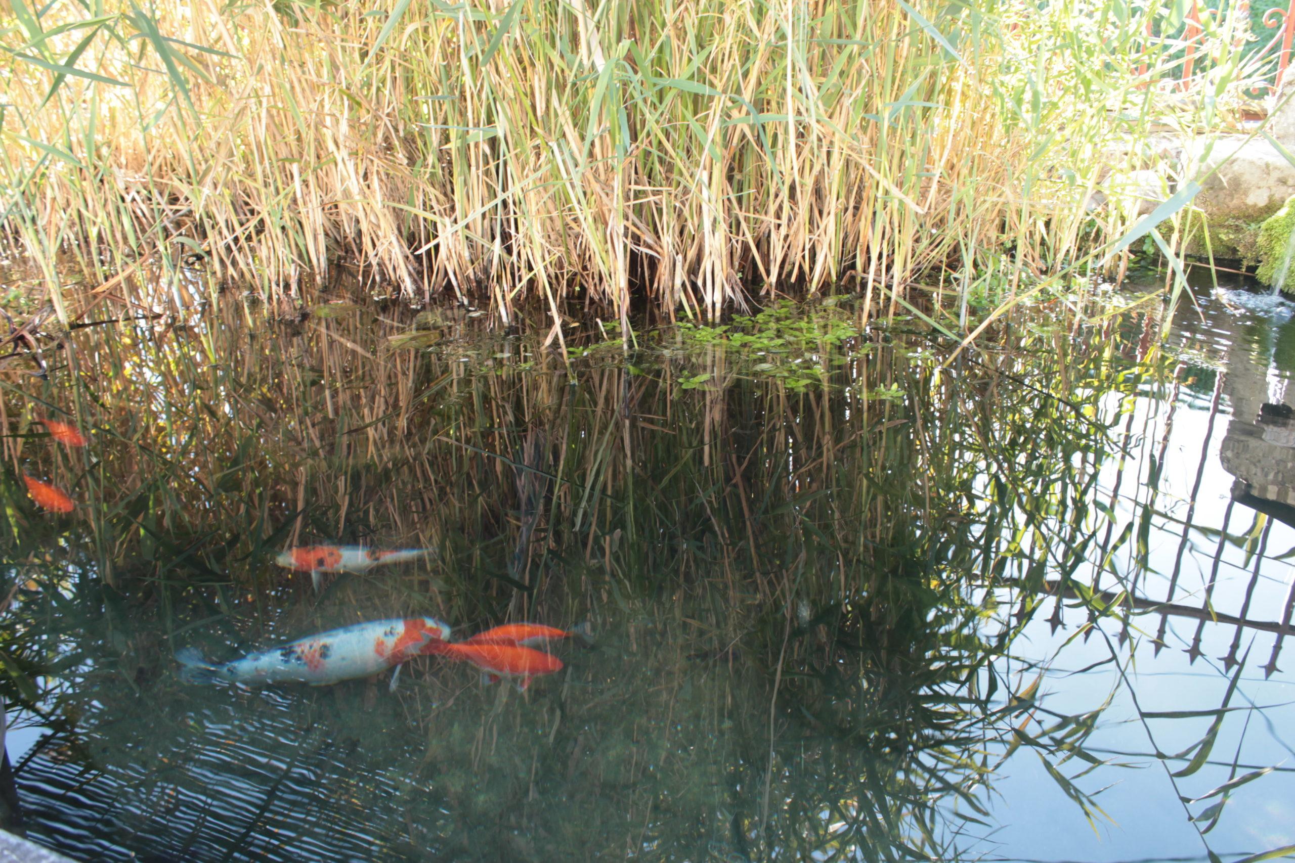Eau et poisson - Anneyron